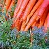 Agriculture et jardinage